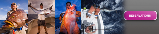Check Out Our Great Catches While Fishing in Bermuda